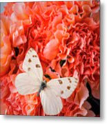 White Butterfly On Pink Carnations Metal Print
