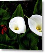 White Calla Lily Metal Print