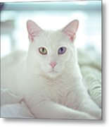 White Cat Laying On Comfy Bed Metal Print