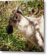 White Cat On The Hunt  Metal Print