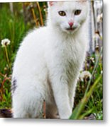 White Cat Sitting Metal Print