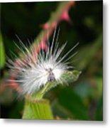 White Caterpillar  Metal Print