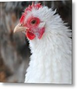 White Chicken Metal Print