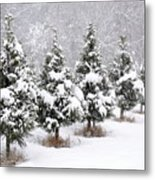 White Christmas At The Christmas Tree Farm Metal Print