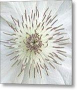 White Clematis Flower Garden 50121b Metal Print