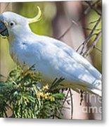 White Cockatoo Metal Print