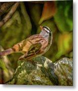 White Crowned Sparrow Metal Print