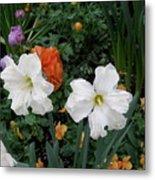 White Daffodills Metal Print
