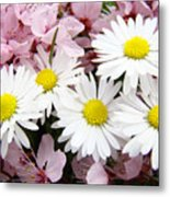 White Daisies Flowers Art Prints Spring Pink Blossoms Baslee Metal Print