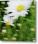 White Daisy Digital Oil Painting Metal Print