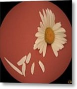 Encapsulated Daisy With Dropping Petals Metal Print