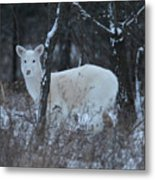 White Deer In Winter Metal Print