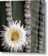 White Desert Jewel Metal Print