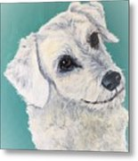White Dog Metal Print
