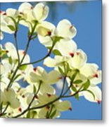 White Dogwood Flowers 1 Blue Sky Landscape Artwork Dogwood Tree Art Prints Canvas Framed Metal Print