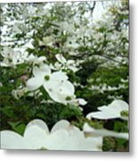 White Dogwood Flowers 6 Dogwood Tree Flowers Art Prints Baslee Troutman Metal Print
