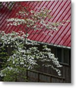 White Dogwood In The Rain Metal Print