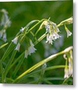 White Drooping Flower Metal Print