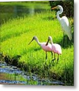 White Egret And Roseate Spoonbills Metal Print