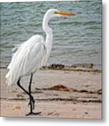 White Egret On Beach Metal Print