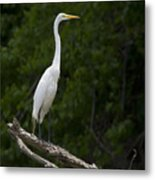 White Egret-signed-#0493 Metal Print