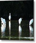 White Egrets Metal Print