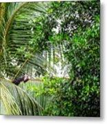 White Faced Capuchin Monkey Costa Rica Metal Print