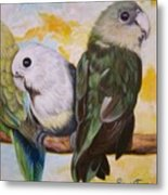 Chloe The    Flying Lamb Productions           White Faced Lovebirds Metal Print