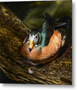 White-faced Whistling Duck  Metal Print