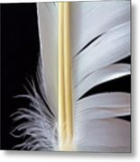 White Feather Metal Print by Bob Orsillo
