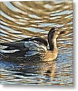 White Feathers Abstract   Metal Print