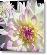 White Floral Art Bright Dahlia Flowers Baslee Troutman Metal Print