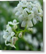 White Floral Cluster Metal Print