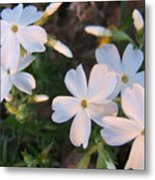 White Floral Lights Metal Print
