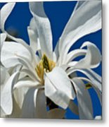 White Flower Blue Skies Metal Print
