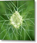 White Flower Spidery Leaves Metal Print