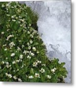 White Flowers And Water Metal Print