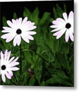 White Flowers In The Garden Metal Print