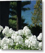 White Flowers W16 Metal Print