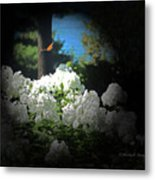 White Flowers With Monarch Butterfly Metal Print