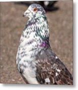 White-gray Pigeon Profile Metal Print