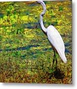 White Heron 1 Metal Print