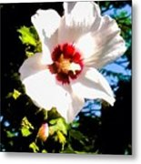 White Hibiscus High Above In Shadows Metal Print