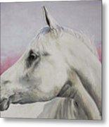 White Horse- Arabian Metal Print