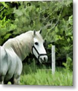 White Horse In A Green Pasture Metal Print
