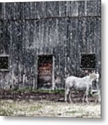 White Horse In A Snowstorm  Metal Print