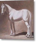 White Horse Study Metal Print