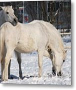 White Horses In The Snow  Metal Print