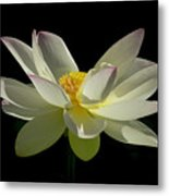 White Hot And Graceful Metal Print