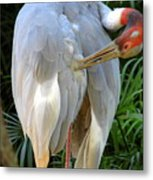 White Ibis At The Zoo Metal Print